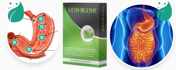 Bilakah anda dapat melihat kesan Vermigone?