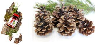 Pine Pollen - harga, tindakan, ulasan forum, di mana untuk membeli? Di apotek atau di web pengeluar?